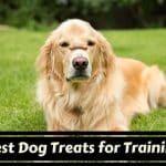treats for a dog