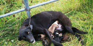 abandoned mother dog afraid