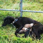 abandoned mother dog