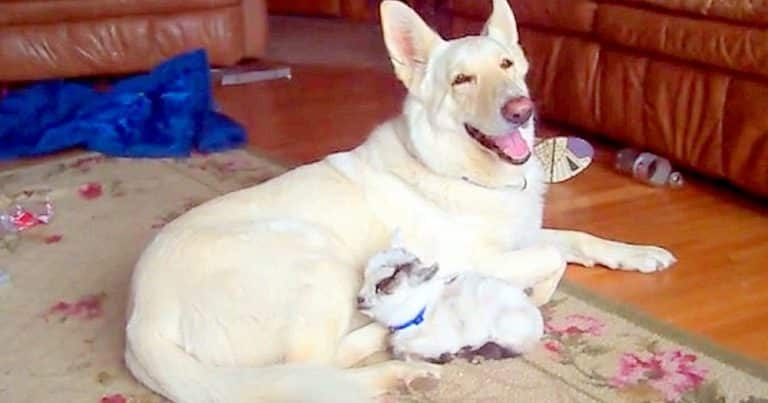 motherly dog
