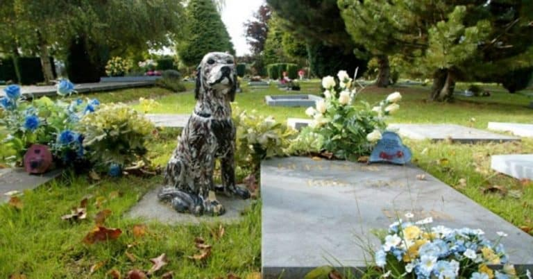 final resting place for pet