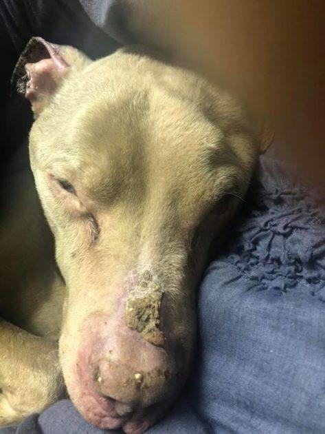 cancer shelter dog