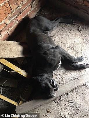 poisoned dog