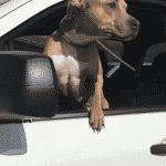 dog dumped