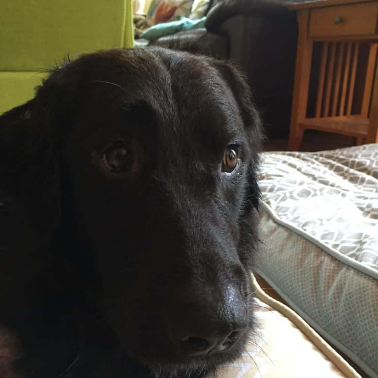 family dog injured