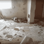 terrified dog family in crumbling house