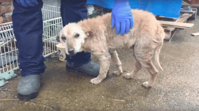 savior vet finds dog
