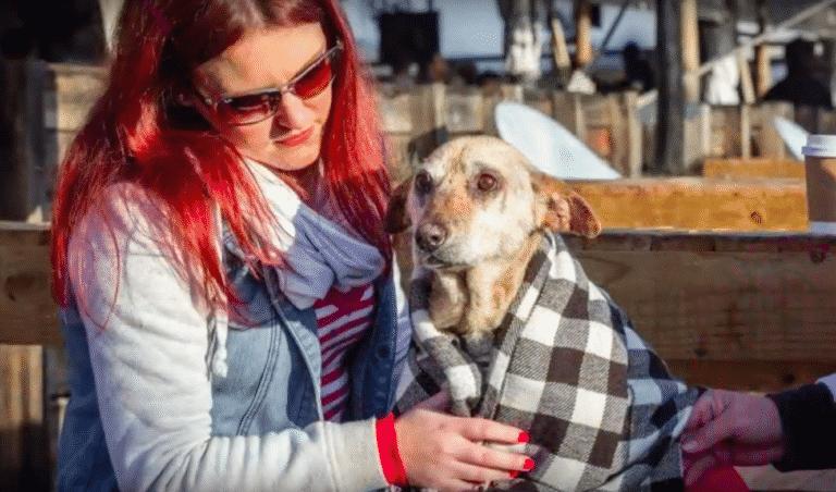 savior vet finds dog home