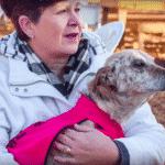 savior vet dog recovery