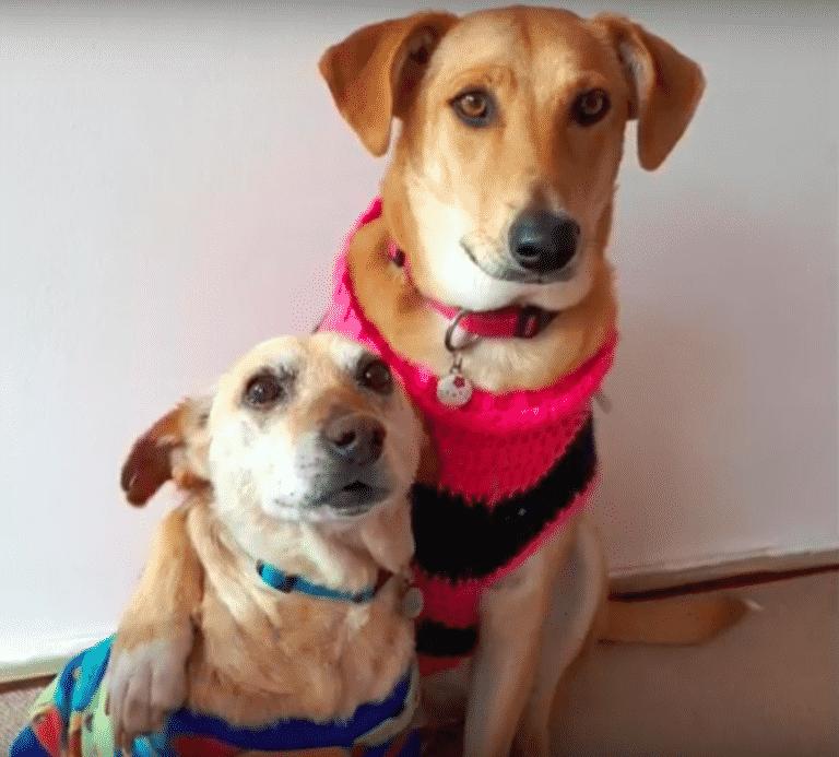 dog finds companion