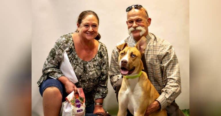 too good dog found family