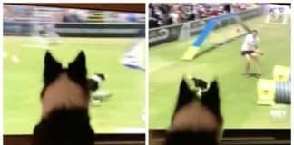 amazing dog react