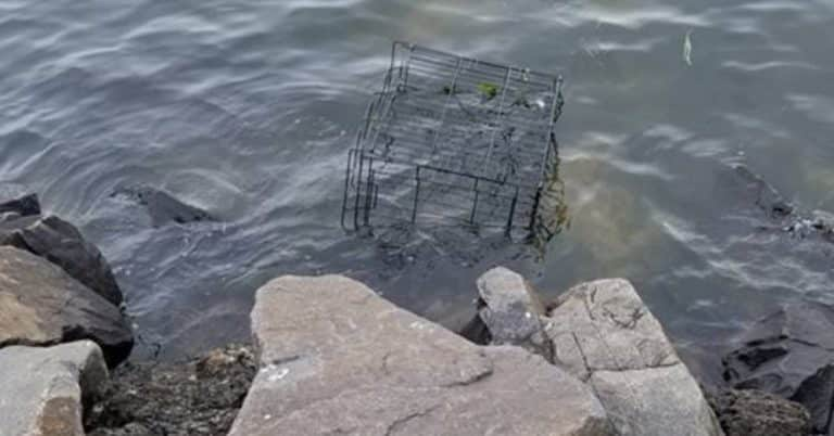abandoned puppy cage in water