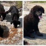 castaway-puppies-3-768×402