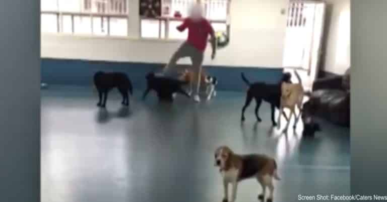 staff kicks dogs