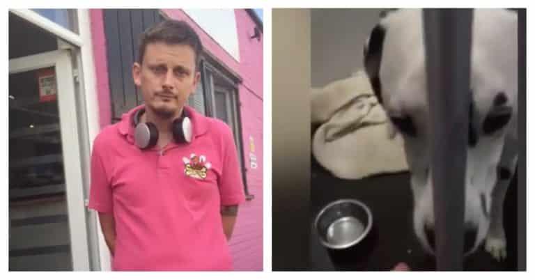 Staff kicking dog owner