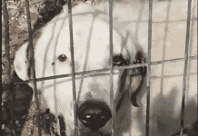 animals living in terrible conditions