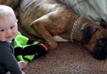 boxer shot dead