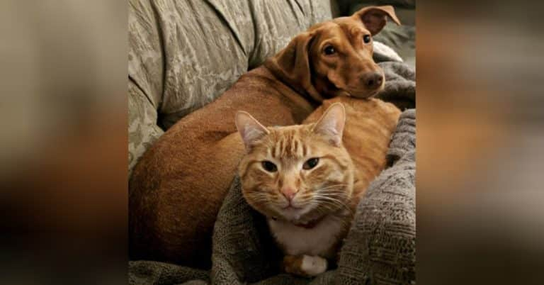 anxious dog and cat