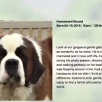 im-st-bernard-adoption-2-768×402