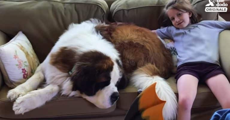 130-pound gentle giant adopted