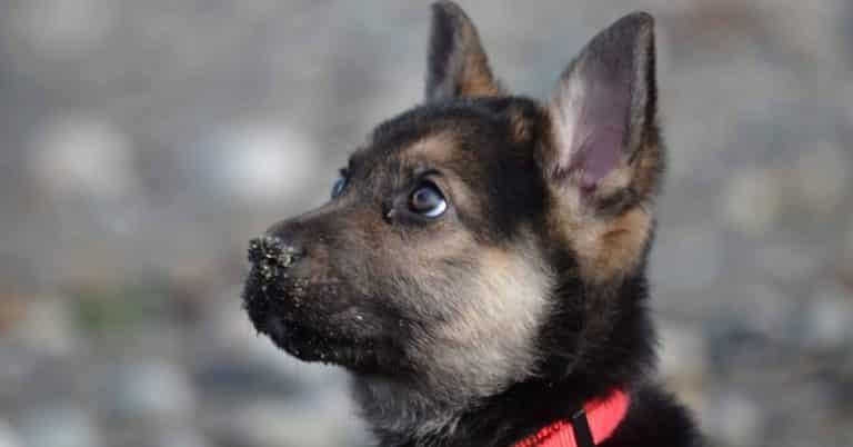 puppy bucket list