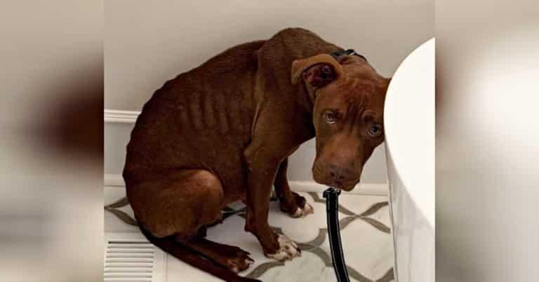 Shelter dog sad