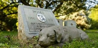 final resting place for pets