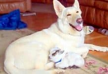 motherly dog