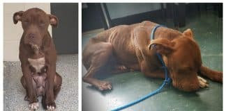 shelter dog scared of humans