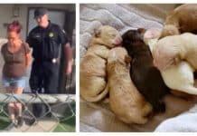 7 newborn puppies owner arrested