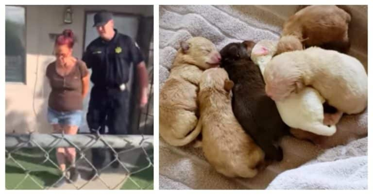 7 newborn puppies owner arrested