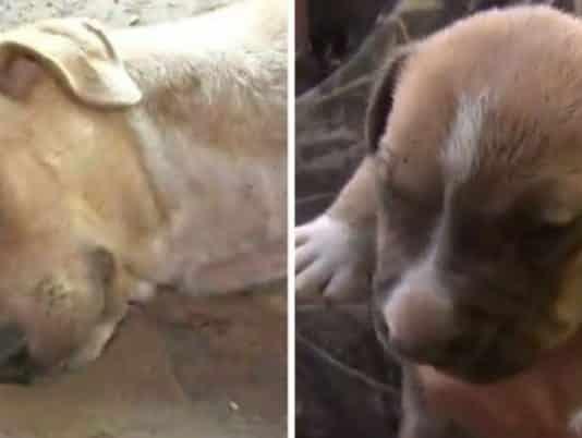 terminally ill person dogs