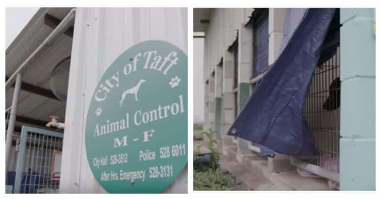 derelict shelter animals