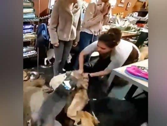 grabs a dog