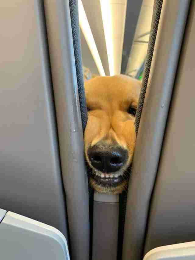 - dog sought the attention of fellow passengers