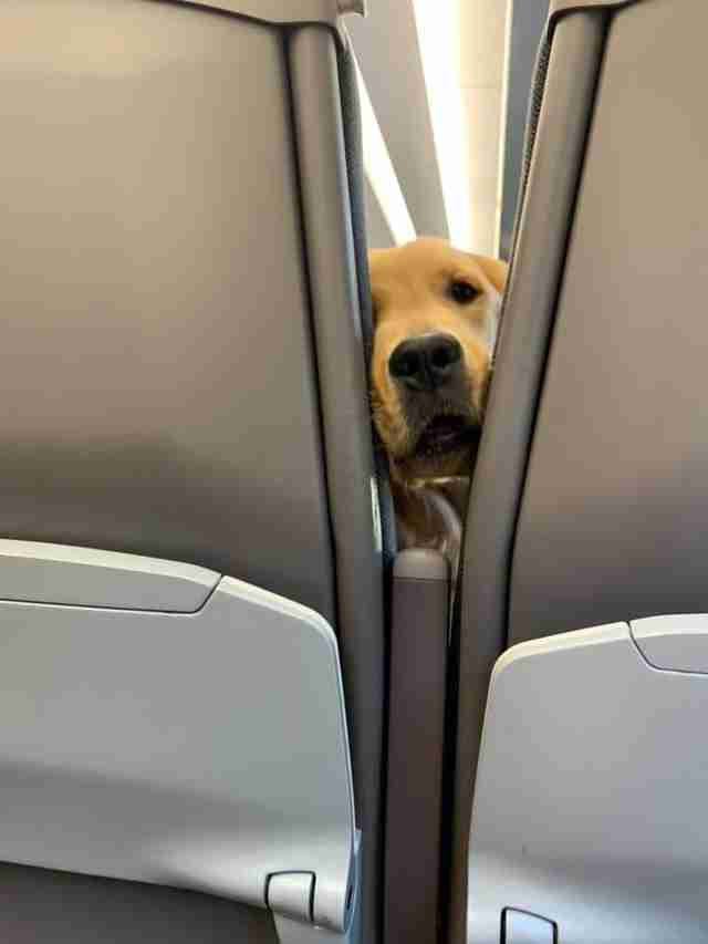 dog sought the attention of fellow passengers