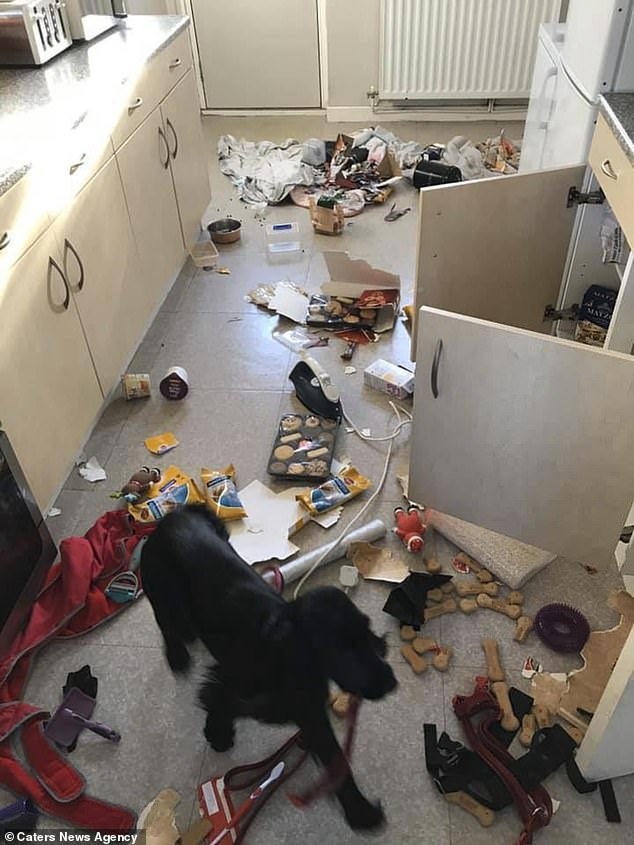 dog destroyed home
