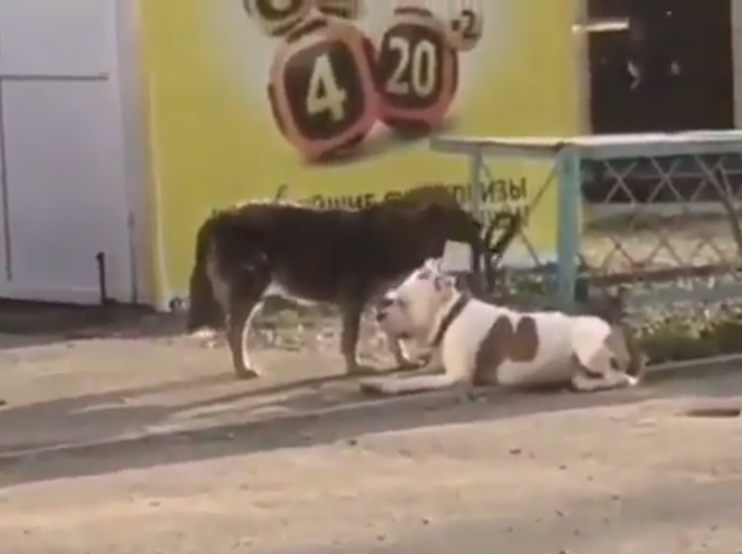 Remove term: a stray dog freed a pet dog a stray dog freed a pet dog