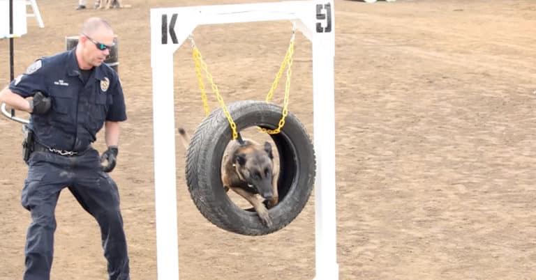 police dogs k9