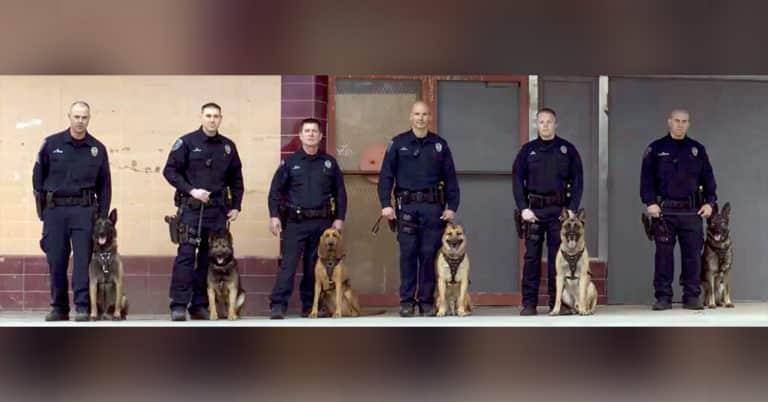 dingo the police dog