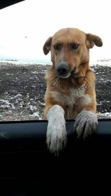 Stray Dog Begged People To Adopt Him