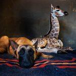 south-africa-dog-giraffe-04