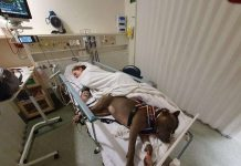 service dog saved the owner's life