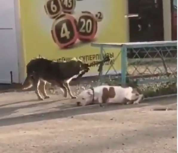 two dogs on street