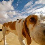 dogs avoid bad people