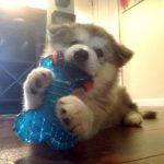 Dog destroys all toys