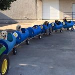 80-year-old-man-builds-dog-train-to-take-rescued-dogs-out-on-adventures-758×397