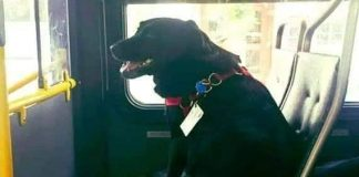 dog rides buses solo