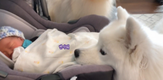 dog loves his baby